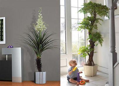 Cuidados de las plantas de interior