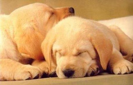 Buenas razones para tener un perro en casa