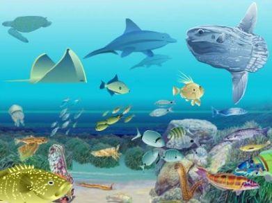 Recursos marinos amenazados